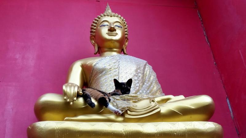 Buddha and a Cat at Wat Buppharam