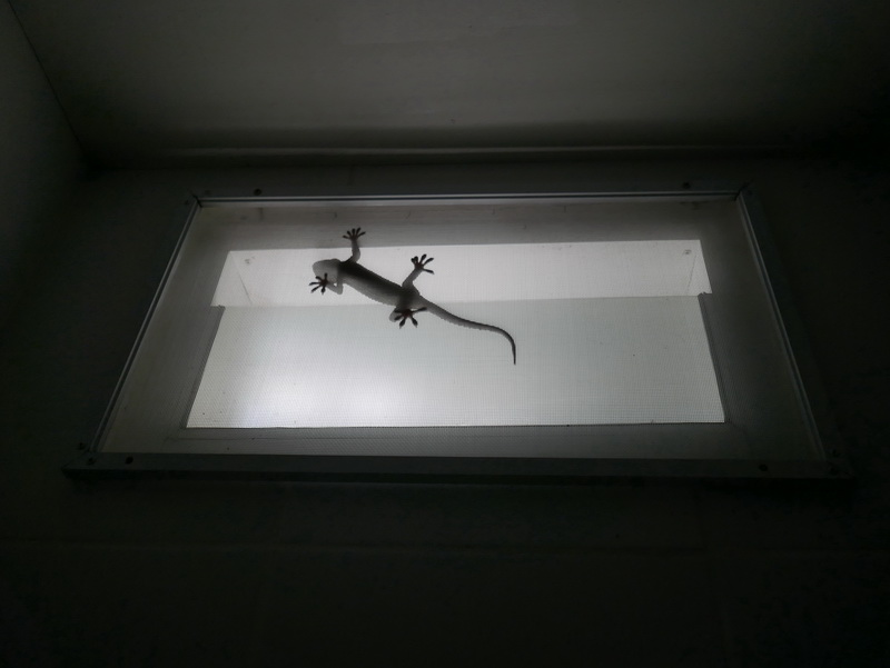 Watching a Gecko